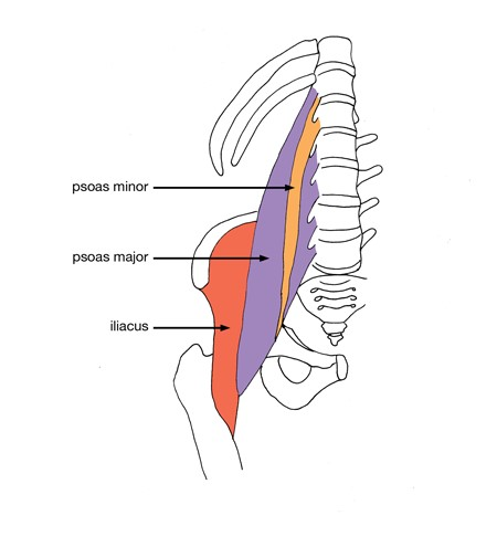 stretching strengthening for the psoas muscle enhance physiotherapy